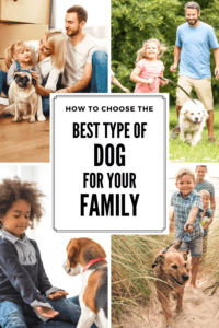 best type of dog for your family